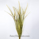 Variegated Miscanthus & Fountain Grass