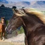 Horse #2 by Poppa-Artzee