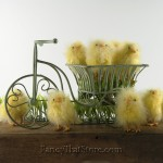 Feathered Chicks Set of 4